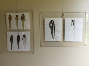 Larvae Ink Drawings Installation Shot at MDI Biological Laboratory